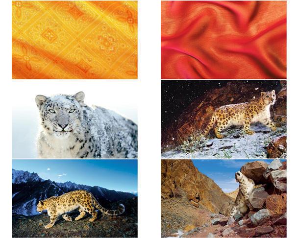 snow_leopard_desktops_5