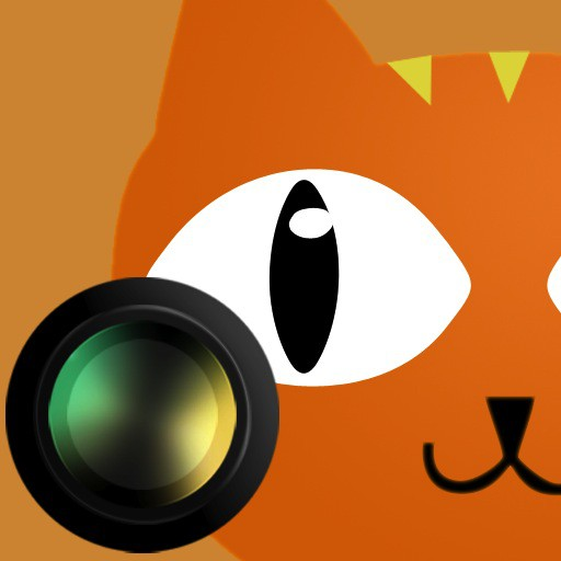 20110114-catcamera.jpg