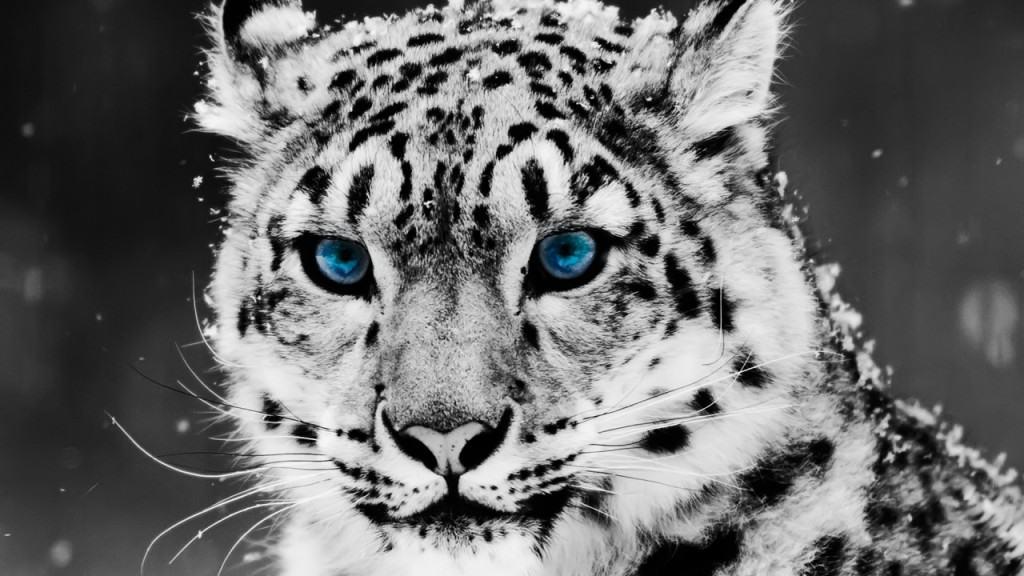 Leopard 10.6 7
