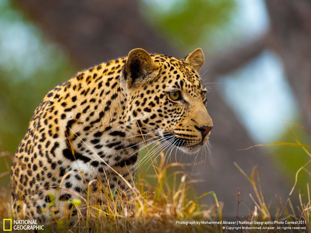 Download hundreds of breathtaking national geographic - Best animal wallpaper download ...