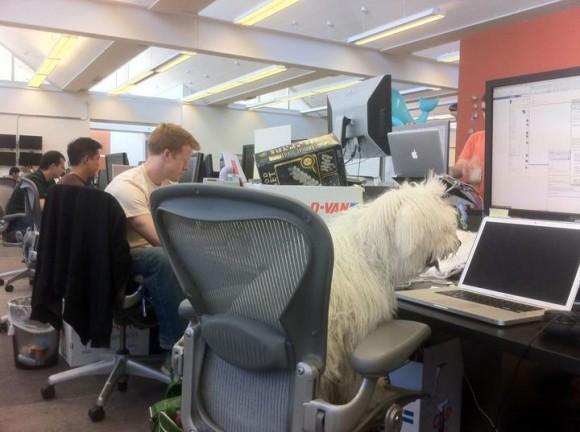 Mark Zuckerberg S Dog Blogs From A Macbook Pro At Facebook