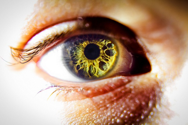 A retina, surrounded by an eye. Photo Bodey Marcoccia (CC BY-SA 2.0)