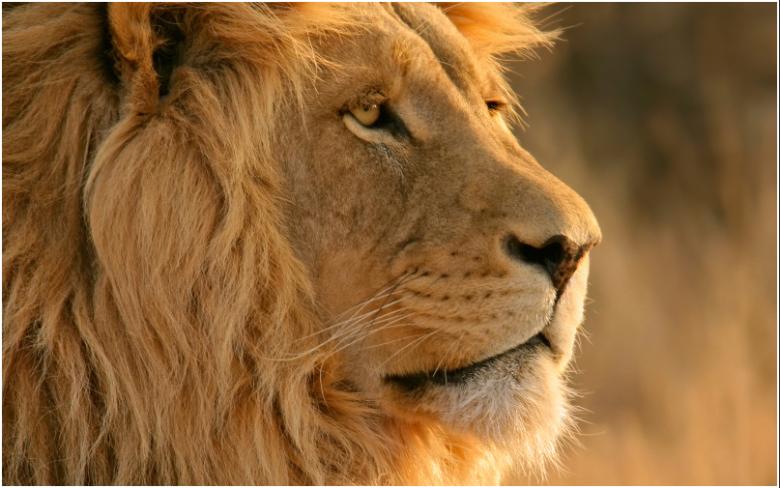 lion 10.7