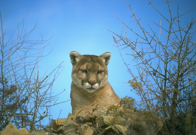 Many of Mountain Lion's new features are perfect for businesses, schools, and enterprises.