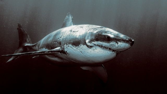 The 13 Most Awesome Wallpapers For People Who Love Shark