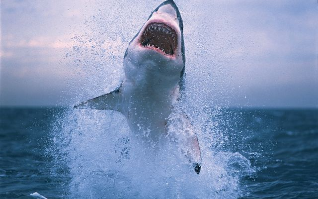 The 13 Most Awesome Wallpapers For People Who Love Shark Week Gallery