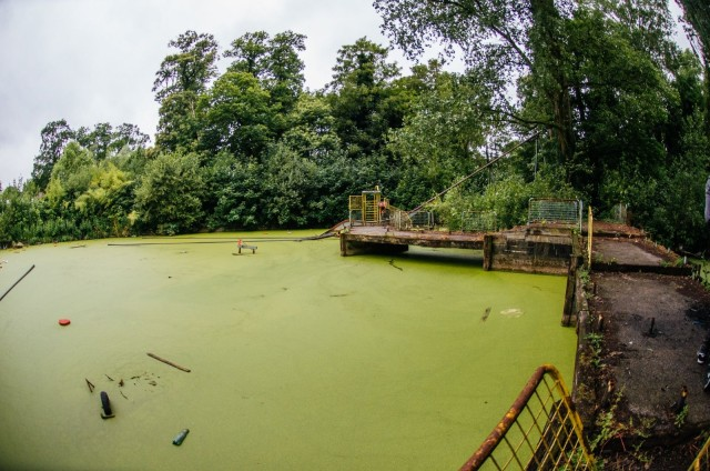 A sea of algae