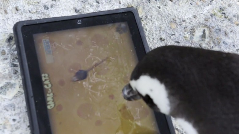 These cute penguins love playing iPad games