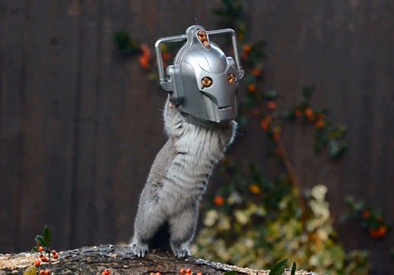 A squirrel unknowingly looks like a Cyberman from the hit TV show Doctor Who. Photo by Chris Balcombe