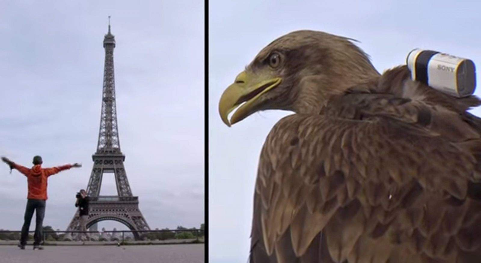 Victory, a white tailed eagle, ready to fly off the top of the Eiffel Tower with a Sony Action Cam Mini. Photo: Sony/YouTube
