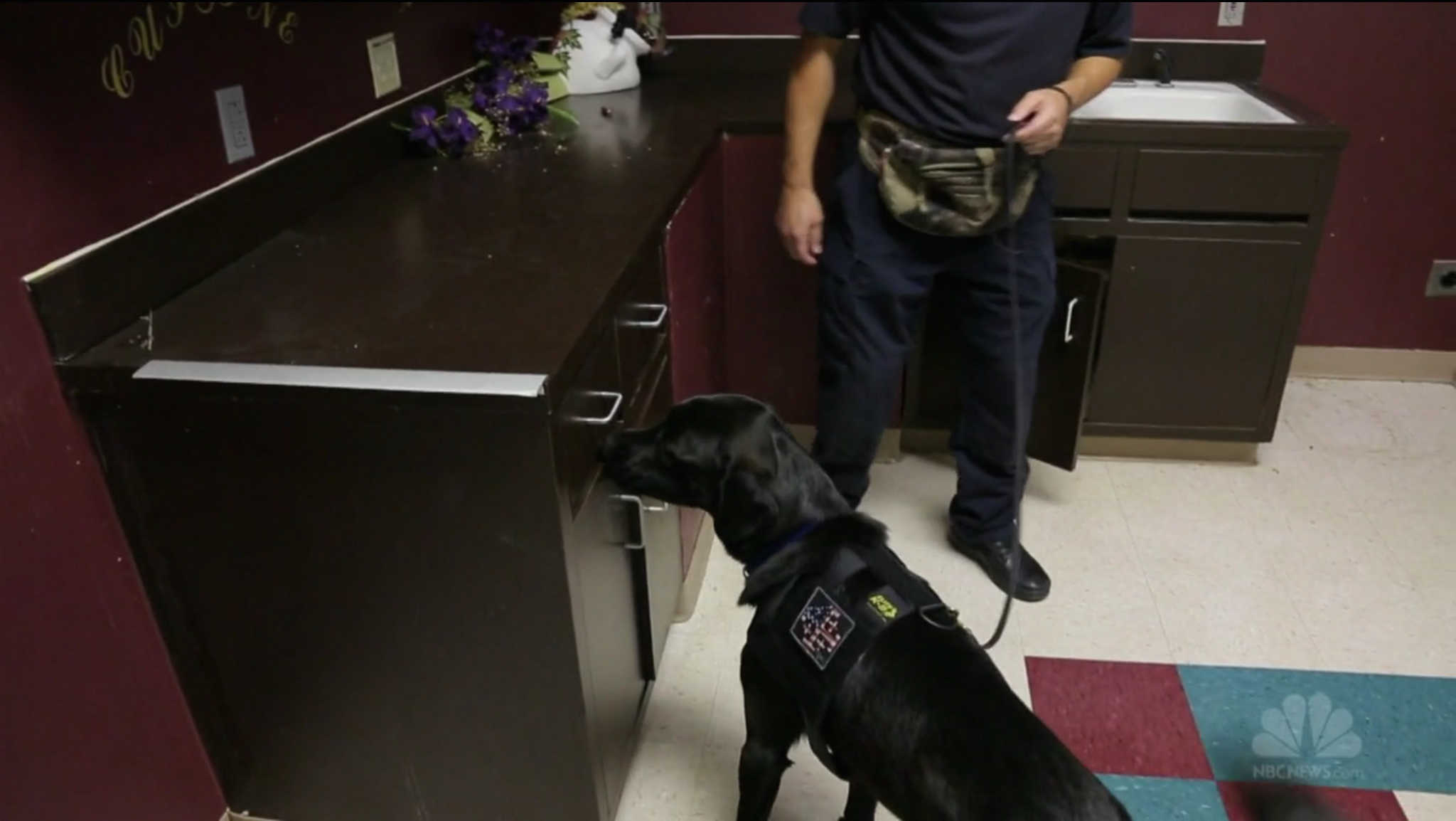 Bear is one of five electronics-sniffing dogs