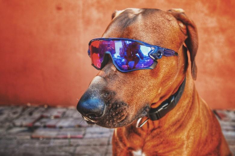 Jawbreaker sunglasses with Prizm lens by Oakley