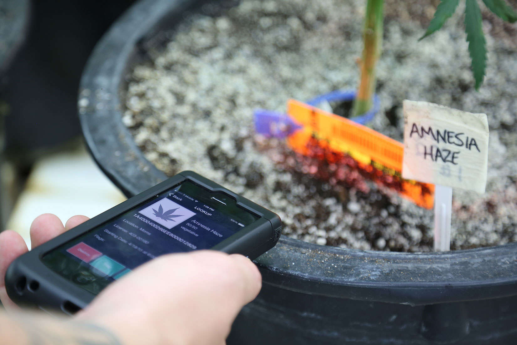 iPhone scanners are helping legal cannabis growers track product and stay compliant with state regulations.