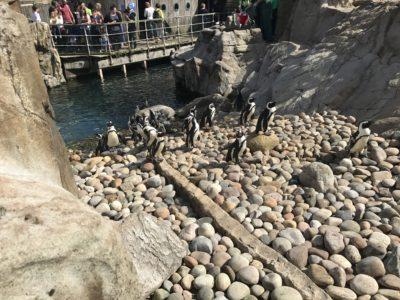 Penguins on the rocks.