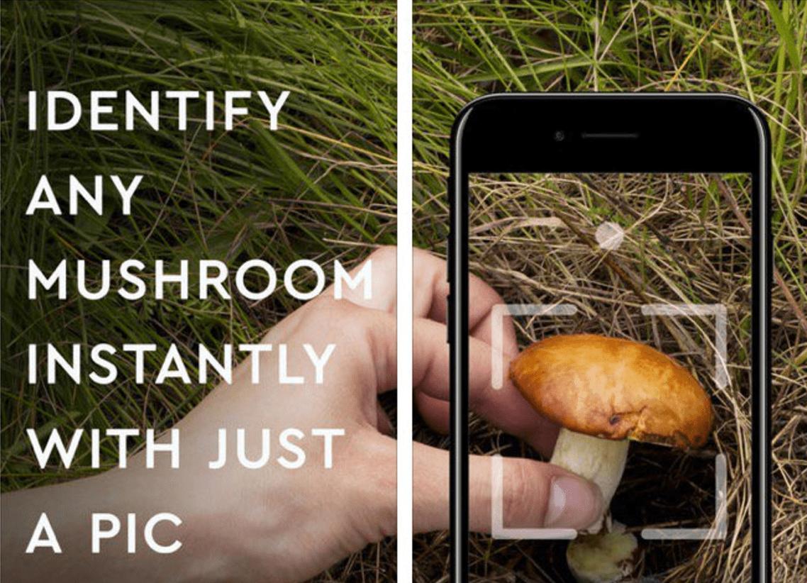 mushroom ios