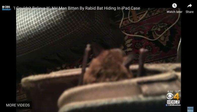 bat wedged between iPad and case