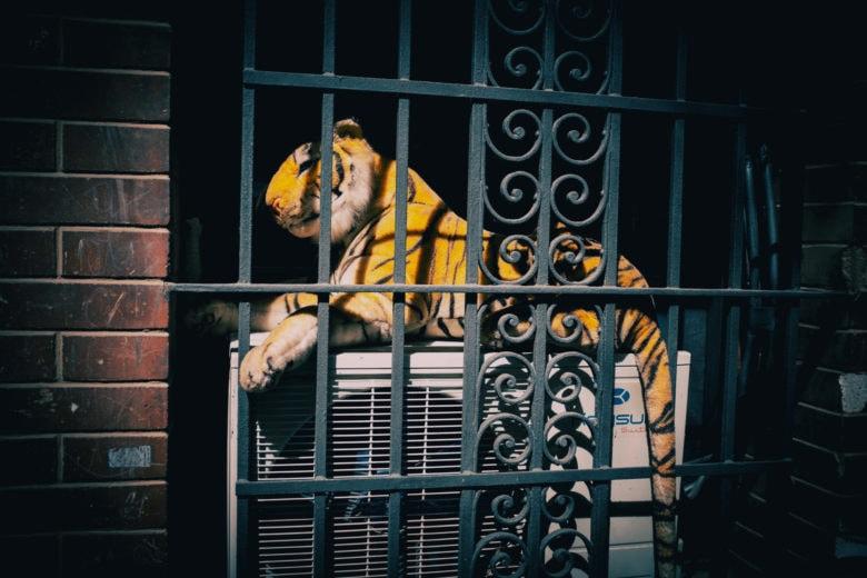 Una metáfora de Safari bastante tensa.