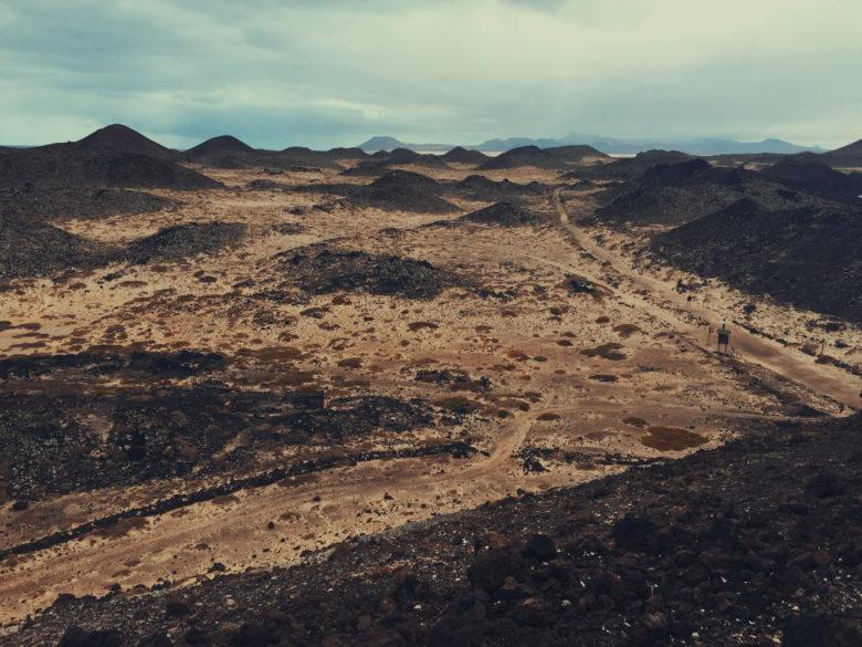 Yes, another desert-as-safari metaphor.