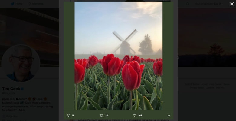 Tim Cook retweets photo for World Photography Day