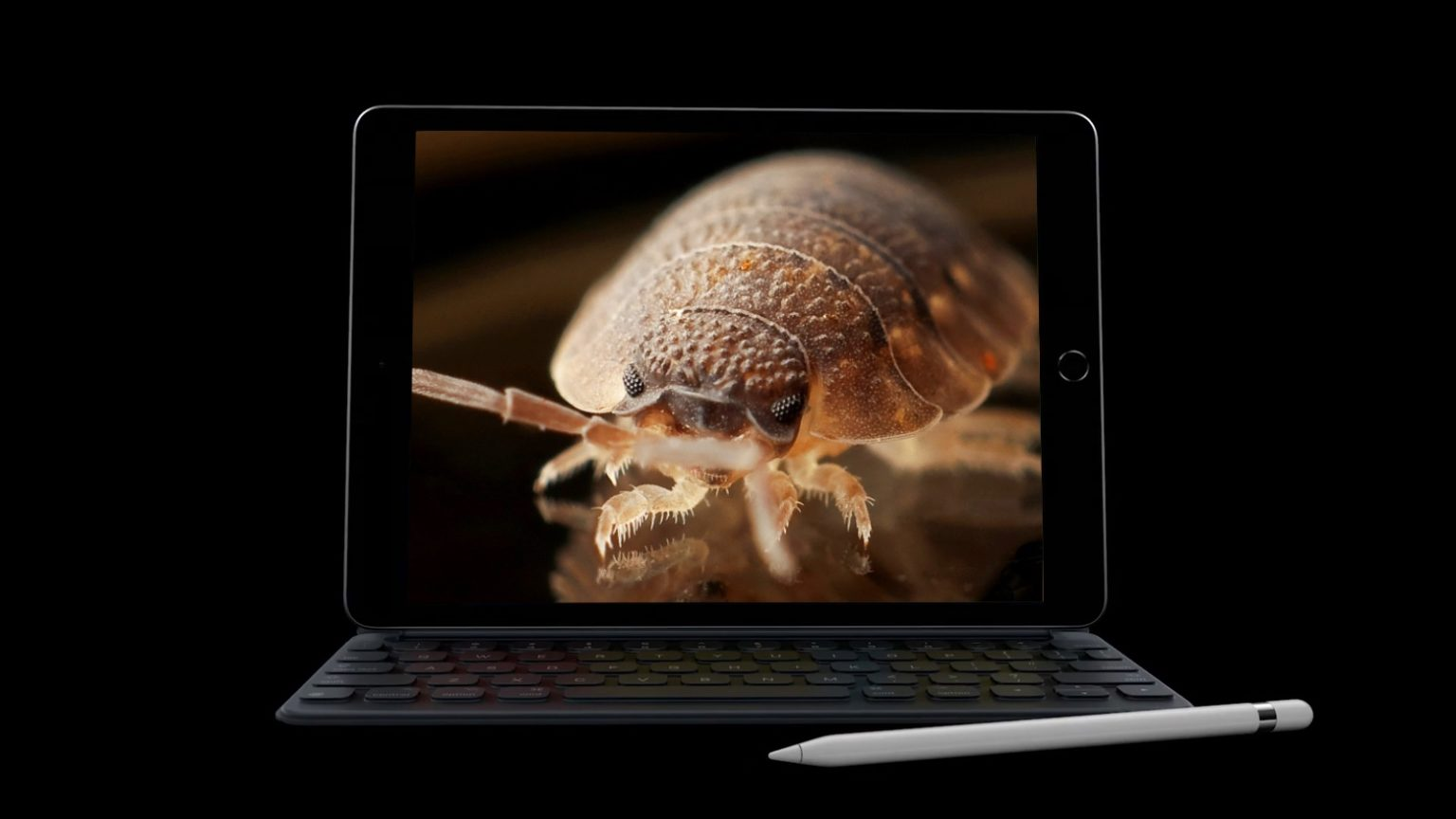 Even the best iPads have bugs