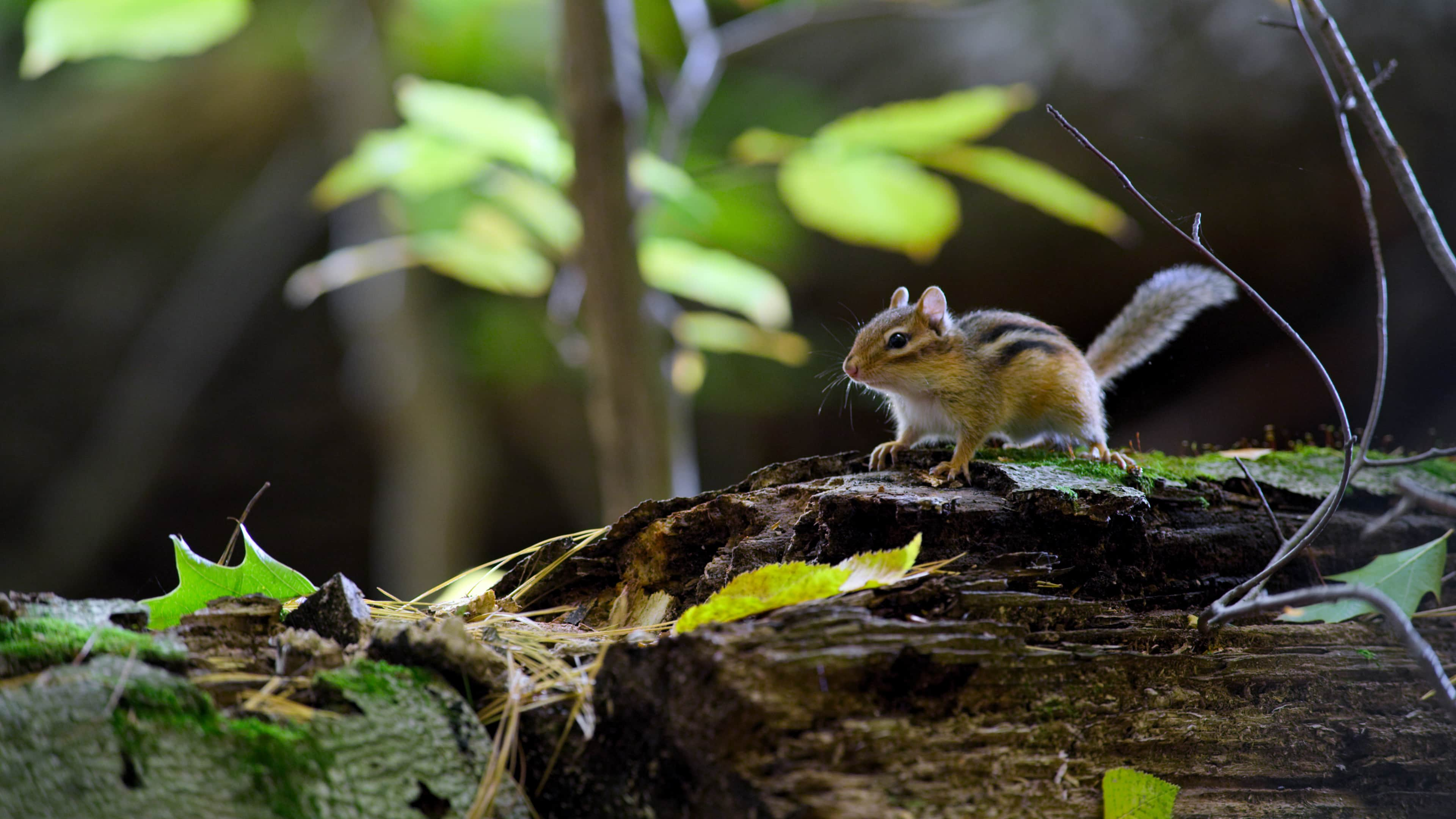 It's all cute all the time in 'Tiny World,' the new Apple TV+ nature docuseries