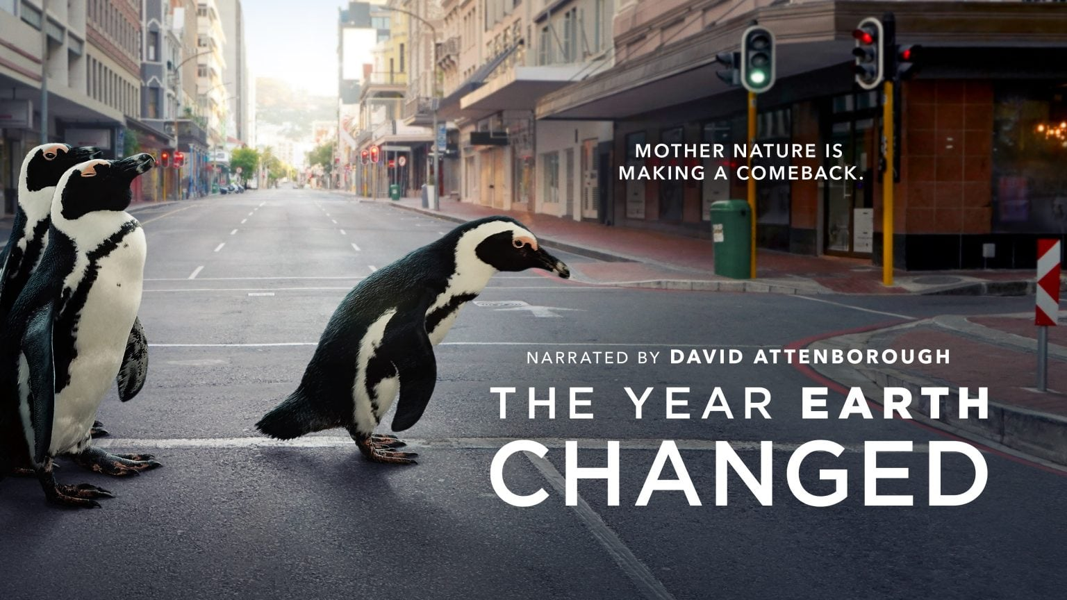 Penguins too fill us in on The Year Earth Changed