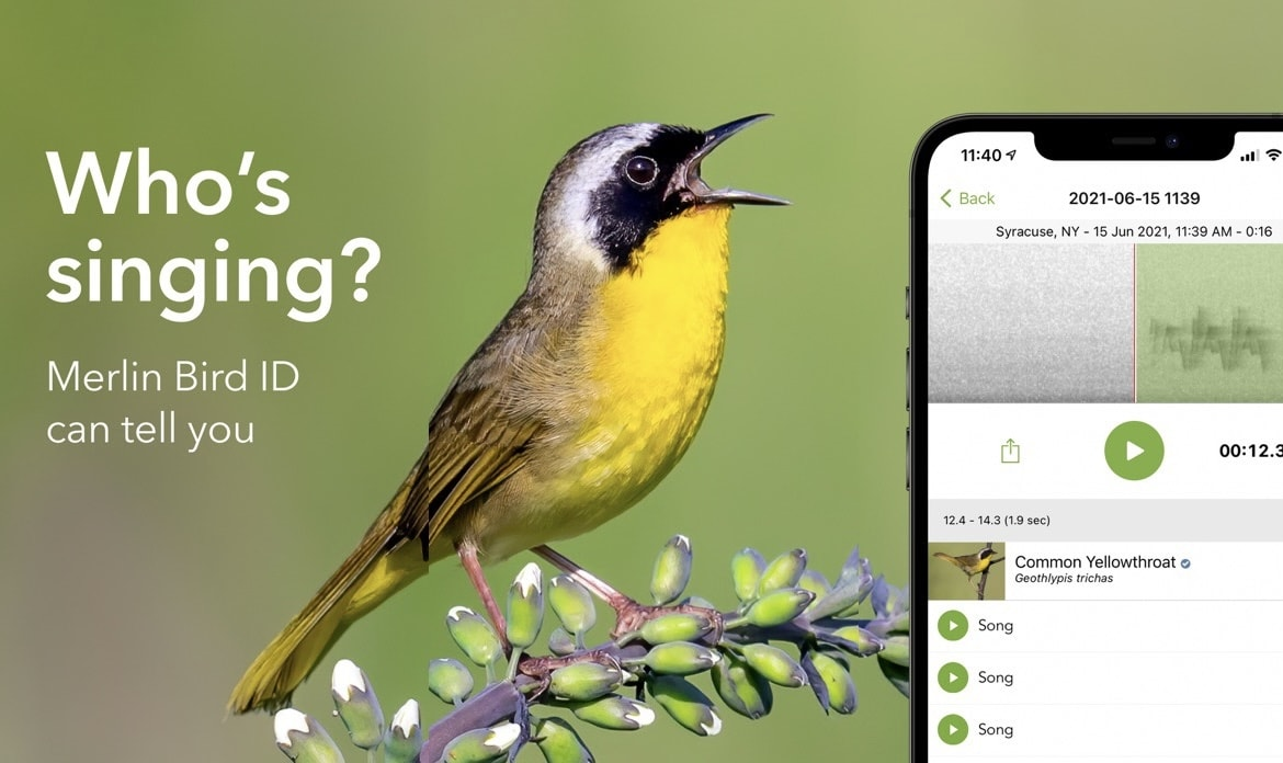 Merlin can help identify birds by sound or photograph